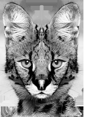 slide2_serval.png